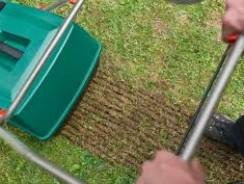 Why and how to scarify your lawn?